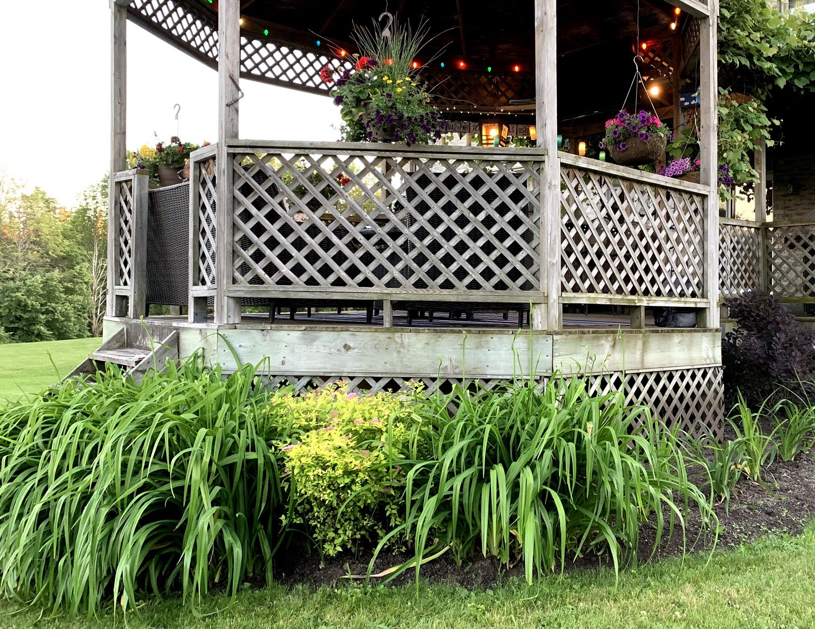 plans planted in black mulch in between grass and wood gazebo